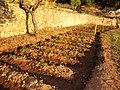El huerto de Getsemani La Costa - panoramio.jpg