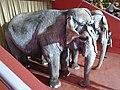 Elephants, Kazan circus (2021-02-13).jpg