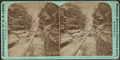 Elphin gorge, Watkins Glen, by Crum, R. D., fl. 1870-1879.png