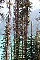 Emerald Lake IMG 5112.JPG
