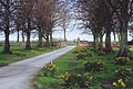 Entrance road to Teversal Manor Gardens, Notts. - geograph.org.uk - 1491113.jpg