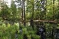 Erlenbruch Langwiesenholz 05.jpg