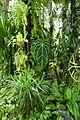 Espèces tropicales-Jardin des plantes de Nantes (8).jpg