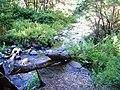 Estero en el Valle de las Catas 5.jpg