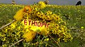"Ethiopian New Year Landscape. Photo Taken on September 11 2010 Ethiopian Calendar. Ethiopian indigenous flower ""Adey Abeba"" Sheeps seen grazing.jpg"