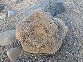 Ethiopie-Danakil-Fossiles (9).jpg