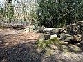 Fallen tree on Newmans hill - geograph.org.uk - 367754.jpg