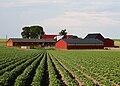 Farm Kartoffelfeld Schweden.jpg