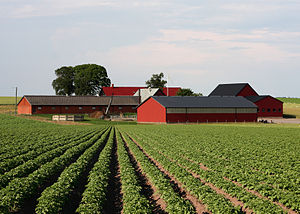 Agriculture in Sweden - Potato field in Sweden.