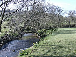 Farndale daffs on Easter Saturday 2007 - geograph.org.uk - 391928.jpg