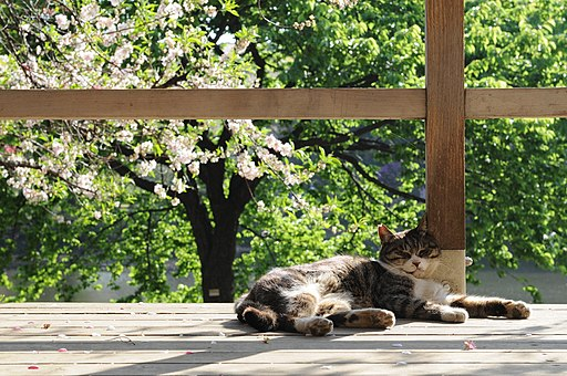 Fat tabby cat sleeping in clining to a pillar-Hisashi-01