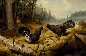 Ateneum - Image: Ferdinand von Wright The Fighting Capercaillies Google Art Project