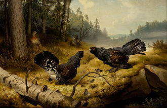 Ateneum - Image: Ferdinand von Wright The Fighting Capercaillies Google Art Project