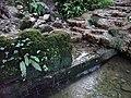 Ffynnon St Dyfnog - St Dyfnog's Well, Llanrhaeadr, Denbighshire, Wales 18.jpg