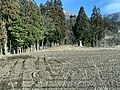 Field beside a main road in Shirakawago.jpg
