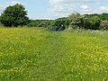 Field with buttercups, Norwood Green - geograph.org.uk - 835122.jpg