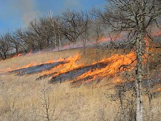Savanna - Prescribed burn; Wisconsin bur oak savanna