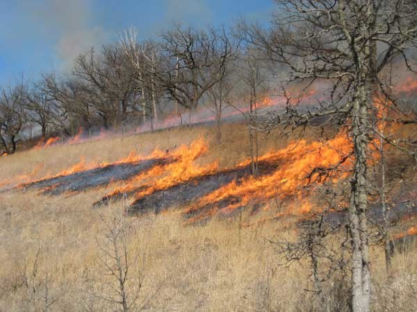 Fire-sav-S-slope-3720
