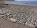 Fische trocknen Tarrafal.JPG