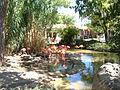 Flamingos Rio Grande Zoo.jpg