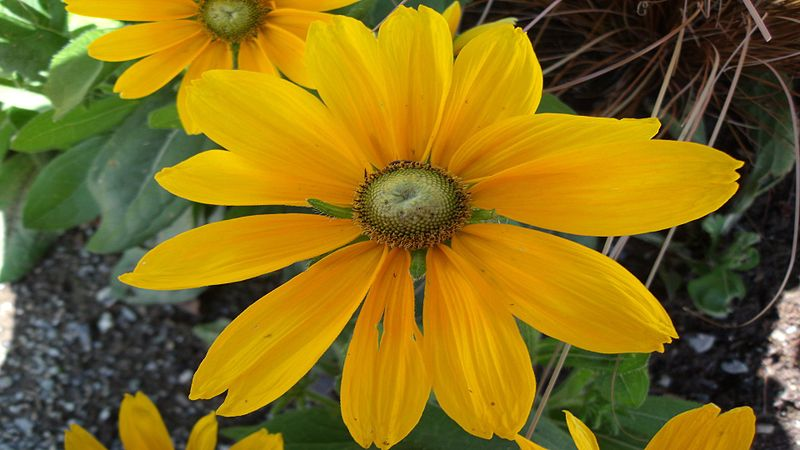 File:Fleur128.jpg