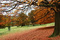 Flickr - Duncan~ - Autumn ^4.jpg