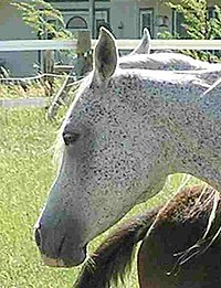 Kommt frau pferd in Lieferketten