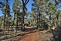 Flinders Ranges SA 5434, Australia - panoramio (112).jpg