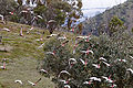 Flock of galah and sparrows02.jpg