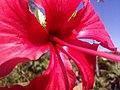Flor de Artur 3.jpg