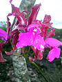 Flores da Chapada 07.jpg