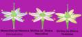 Flores e estruturas reprodutoras.png