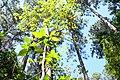 Floresta ufscar.jpg