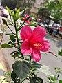 Flower.me.jpg