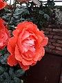 Flower20180428 085440.jpg