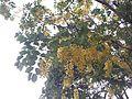 Flower6574832910-.jpg