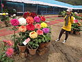 Flower Show 2012 - Indian Botanic Garden - Howrah 2012-01-29 1772.JPG
