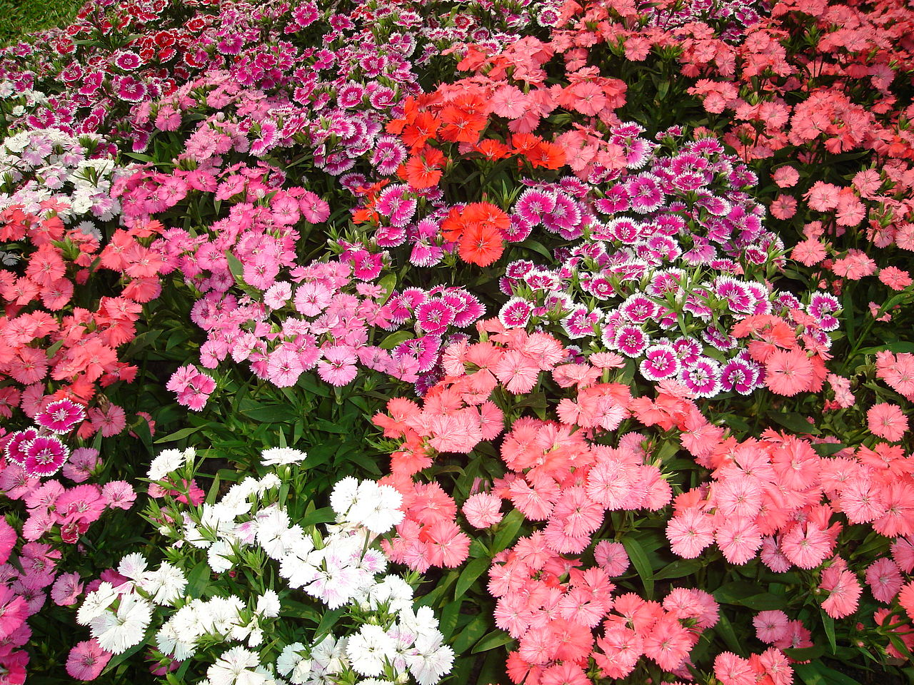 Best Annual Bedding Flower Combinations