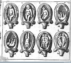 Jane Sharp - Jane Sharp's depiction of foetus in the womb