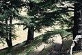 Forêt des cèdres de Bcharré.JPG