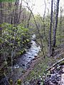 Forest-Creek ForestWander.JPG