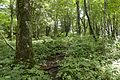 Forest in Doshi 07.jpg