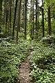 Forest in Mt.Gozen (Ibaraki) 01.jpg