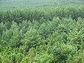 Forest somewhere in Poland.JPG