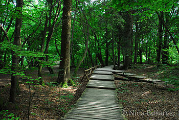 Forest walk at Plitvice National Park.jpg