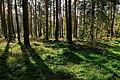 Forst Rundshorn IMG 1706.jpg