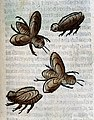 Four insects, possibly bees, woodcut, 1547 Wellcome L0029223.jpg