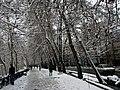 Frist Snow, 2011 Winter,Tehran - panoramio.jpg