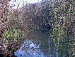 narrow stretch of river, surrounded by willow trees, sunny day