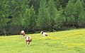 Fulpmes Stubaital - panoramio (26).jpg